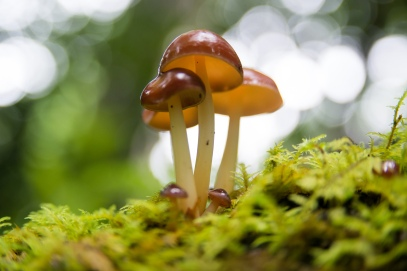 Mycology